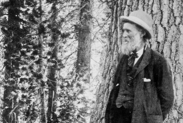 Best nature quotes from John Muir